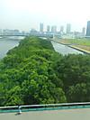 20120810_greenforest